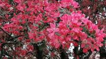 Kvety v plnej kráse