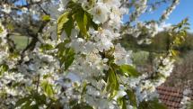 Príroda v plnej nádhere, Levoča