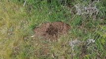 Život v mravenisku