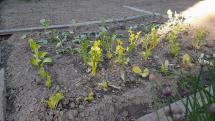 Záhrada na Čiernom Balogu