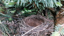 A hniezdo prazdne