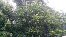 Dnešný dážď Bratislava Petržalka