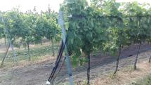 Ochranné siete na viniči