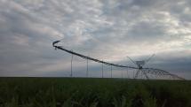 Zavlažovanie kukurice