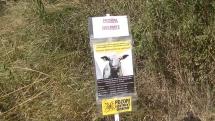 Pastva ovcí  a koz