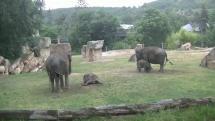 Malé slonice