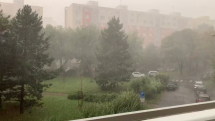Prietrž mračien, Bratislava - Nivy