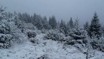 Krása prvého snehu
